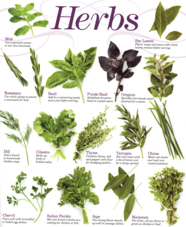 Herbs - NaturalHerbal Supplier And Herbal Specialist